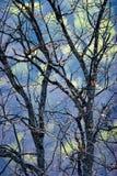 Foglie asciutte di astrazione della cima d'albero fotografie stock
