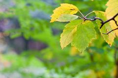 Foglie asciutte di autunno Fotografia Stock