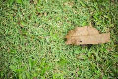 Foglie asciutte di autunno del primo piano Immagine Stock