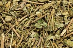 Foglie asciutte organiche di chiretta o di Kalmegh (paniculata di Andrographis) Immagine Stock