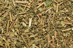 Foglie asciutte organiche di chiretta o di Kalmegh (paniculata di Andrographis) Fotografie Stock