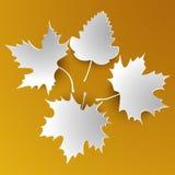 Foglie astratte di bianco di autunno Immagine Stock Libera da Diritti