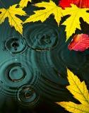 Foglie astratte di giallo di caduta del fondo della pioggia di autunno Fotografia Stock
