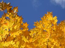 Foglie Autumn Motives Fotografia Stock Libera da Diritti