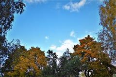 Foglie Autumn Motives Fotografie Stock Libere da Diritti