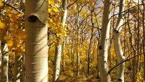 Foglie Autumn Nature Scene Fall Color soffiato vento degli alberi archivi video