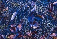 Foglie autunnali cadute coperte di cristalli di ghiaccio da gelo pesante Fotografia Stock Libera da Diritti