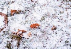 Foglie autunnali sulla terra nevosa fotografie stock