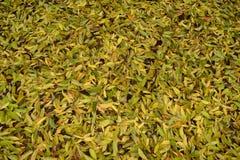 Foglie in autunno Immagine Stock