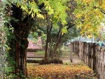 Foglie in autunno Fotografie Stock Libere da Diritti
