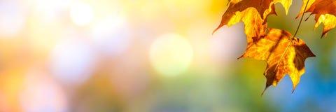 Foglie in autunno fotografie stock