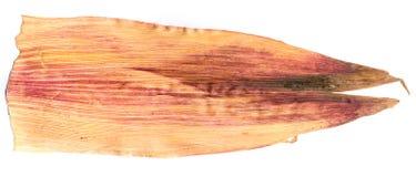 Foglie bianche del mais urgenti isolate su bianco Fotografie Stock