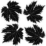 Foglie in bianco e nero dell'uva Immagine Stock Libera da Diritti