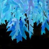 Foglie blu della quercia Fotografia Stock