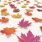Foglie cadenti di autunno isolate su fondo bianco Fotografia Stock Libera da Diritti