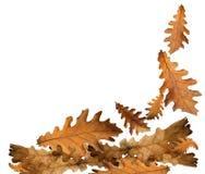 Foglie cadenti di autunno per fondo Fotografie Stock Libere da Diritti