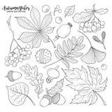 Foglie cadenti e bacche in bianco e nero di autunno Immagini Stock Libere da Diritti