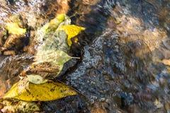 Foglie cadute in acqua Fotografia Stock Libera da Diritti