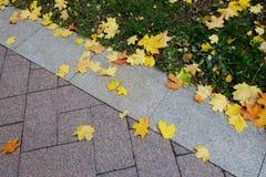 Foglie cadute in autunno Immagini Stock Libere da Diritti