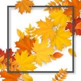 Foglie cadute autunno della pagina Immagine Stock