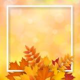 Foglie cadute autunno della pagina Fotografie Stock Libere da Diritti