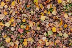 Foglie cadute autunno sul primo piano a terra immagini stock