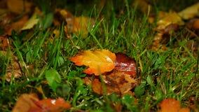 Foglie cadute bagnate su terra erbosa, folliage morto di autunno archivi video