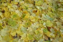 Foglie cadute che riguardano la copertura di terra in autunno Fotografie Stock Libere da Diritti