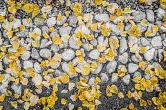 Foglie cadute di giallo che si trovano sulle rocce Fotografia Stock