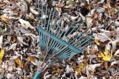 Foglie cadute e un rastrello di giardino Fotografie Stock Libere da Diritti