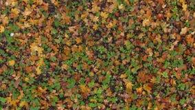 Foglie cadute nel fondo variopinto del modello della foresta di autunno archivi video