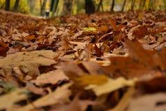 Foglie cadute nella foresta di autunno Fotografia Stock Libera da Diritti