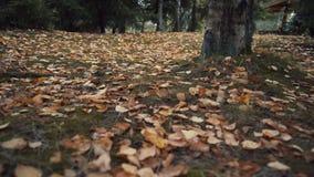 Foglie cadute nella foresta di autunno archivi video