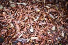 Foglie cadute secche fondo asciutto di autunno Immagine Stock Libera da Diritti