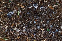 Foglie cadute sporche di bianco e di marrone sulla terra fotografia stock