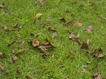 Foglie cadute su erba immagini stock