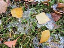 Foglie cadute sul ghiaccio Fotografia Stock Libera da Diritti