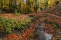 Foglie cadute in una foresta di autunno Immagini Stock