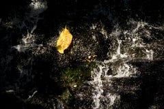 Foglie che cadono sulla cascata fotografia stock libera da diritti