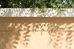 Foglie che gettano le ombre sulla parete del giardino Immagini Stock