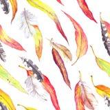 Foglie colorate, piume Reticolo senza giunte di autunno Acquerello - stile d'annata Immagini Stock