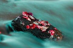 Foglie colorate sulle pietre bagnate Immagini Stock