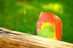 Foglie Colourful su un fondo dell'erba verde e della tavola di legno immagini stock libere da diritti
