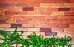 Foglie con il fondo del muro di mattoni Immagine Stock