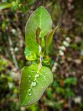 Foglie con le gocce di pioggia nella foresta fotografia stock
