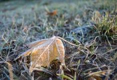 Foglie congelate sulla terra Fotografia Stock