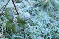 Foglie congelate in una mattina triste immagine stock