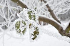 Foglie coperte di gelo nel legno di inverno Immagini Stock Libere da Diritti