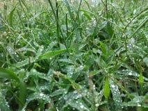 Foglie coperte in pioggia caduta fresca fotografia stock libera da diritti