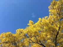 Foglie d'ingiallimento contro il cielo blu fotografia stock